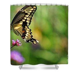 Giant Swallowtail Butterfly Shower Curtain by Karen Adams