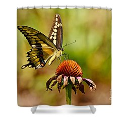Giant Swallowtail Butterfly Shower Curtain by Kathy Baccari
