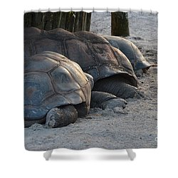 Shower Curtain featuring the photograph Giant Tortise by Robert Meanor