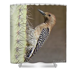 Shower Curtain featuring the photograph Gila Woodpecker by Deb Halloran