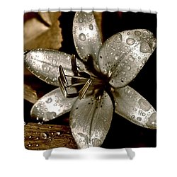Shower Curtain featuring the photograph Gilded  Lilies 2 by Linda Bianic