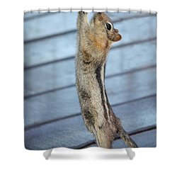 Shower Curtain featuring the photograph Gim-me-gim-me-gim-me by Patrick Witz