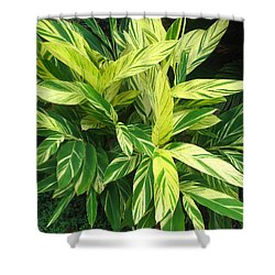 Ginger Lily. Alpinia Zerumbet Shower Curtain by Connie Fox