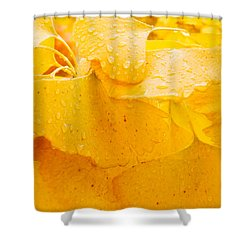 Shower Curtain featuring the photograph Ginkgo Biloba Leaves by Vizual Studio