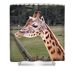 Giraffe 02 Shower Curtain