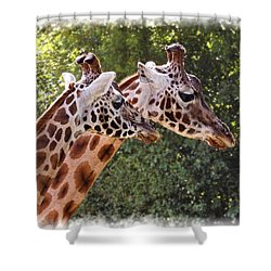 Giraffe 03 Shower Curtain