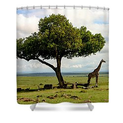 Giraffe And The Lonely Tree  Shower Curtain by Menachem Ganon
