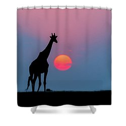 Giraffe At Sunset Chobe Np Botswana Shower Curtain by Andrew Schoeman
