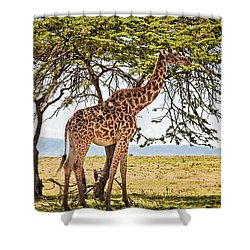 Giraffe Browsing Shower Curtain