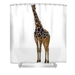 Shower Curtain featuring the photograph Giraffe by Charles Beeler