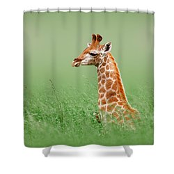 Giraffe Lying In Grass Shower Curtain by Johan Swanepoel