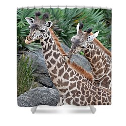 Giraffe Massage Shower Curtain by Richard Bryce and Family