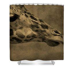 Giraffe Portait Shower Curtain by Dan Sproul