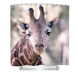 Shower Curtain featuring the pyrography Giraffe Staring  by Shoal Hollingsworth