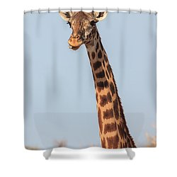 Giraffe Tongue Shower Curtain by Adam Romanowicz