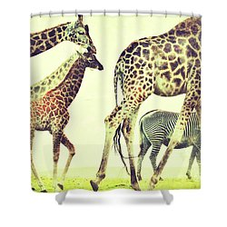 Giraffes And A Zebra In The Mist Shower Curtain by Nick  Biemans