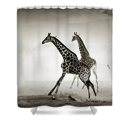 Giraffes Fleeing Shower Curtain by Johan Swanepoel