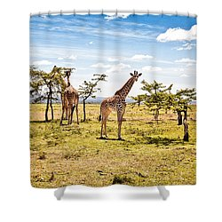 Giraffes In The African Savanna Shower Curtain