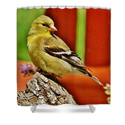 Shower Curtain featuring the photograph Girlie Goldfinch by VLee Watson
