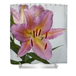 Girosa Lily Shower Curtain by Sandy Keeton