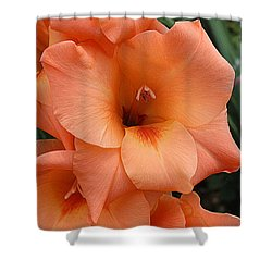 Gladiola In Peach Shower Curtain