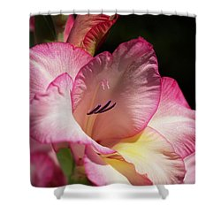 Gladiolus In Pink Shower Curtain by Joy Watson