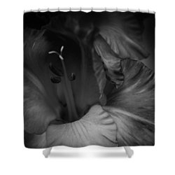 Gladiolus Morning Shower Curtain