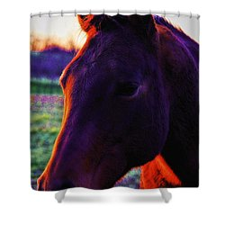 Shower Curtain featuring the photograph Glamour Shot by Robert McCubbin