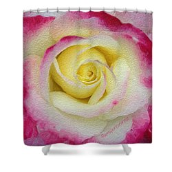 Glazed Red-tipped Rose Shower Curtain