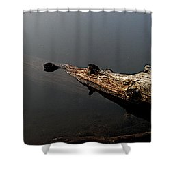 Glen's Log Shower Curtain by Joseph Yarbrough