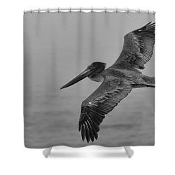 Gliding Pelican In Black And White Shower Curtain by Sebastian Musial