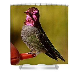 Shower Curtain featuring the photograph Glimmering Red Headed Mail Anna by Jay Milo