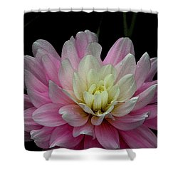 Glistening Dahlia Radiance Shower Curtain