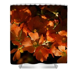Globe-mallow Blooms  Shower Curtain by Saija  Lehtonen