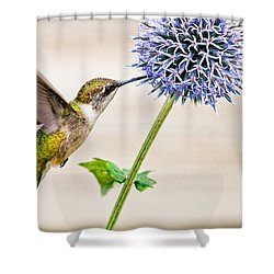 Globe Thistle Hummer Shower Curtain