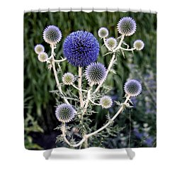 Globe Thistle Photograph By Rona Black