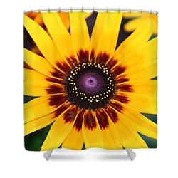 Shower Curtain featuring the photograph Gloriosa Daisy by Denyse Duhaime