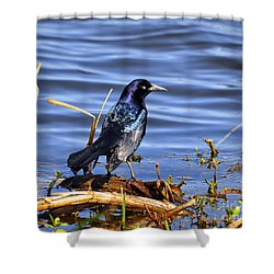 Glorious Grackle Shower Curtain by Al Powell Photography USA