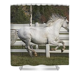Glorious Gunther Shower Curtain by Wes and Dotty Weber