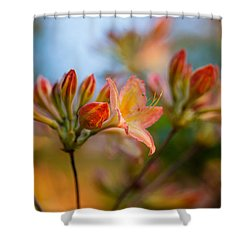 Glorious Orange Blooms Shower Curtain by Mike Reid