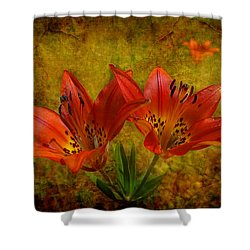 Shower Curtain featuring the photograph Glory Of The Plains by Blair Wainman