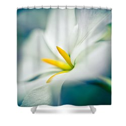 Glory Of The Sun Shower Curtain
