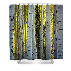 Glowing Aspens Shower Curtain by Inge Johnsson