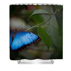 Glowing Blue Shower Curtain by Penny Lisowski