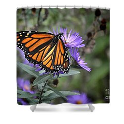 Shower Curtain featuring the photograph Glowing Butterfly by Nava Thompson