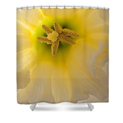 Glowing Daffodil Shower Curtain