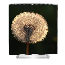 Glowing Dandelion Clock Shower Curtain