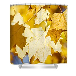 Glowing Fall Maple Leaves Shower Curtain by Elena Elisseeva