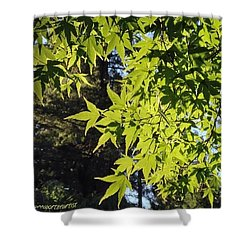 Glowing Greens My Favorite Maple Tree Shower Curtain