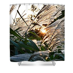 Glowing Pampas Shower Curtain